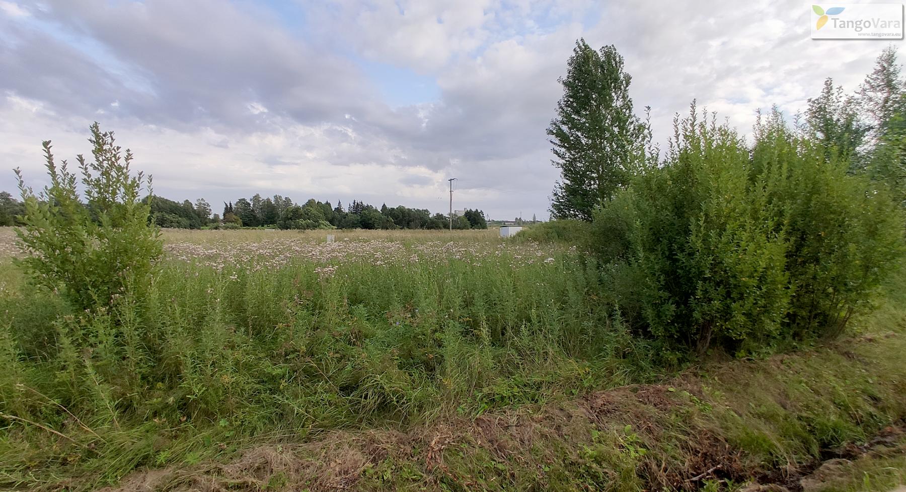 Nurme-raudrohu_Pärnumaa_ves-1