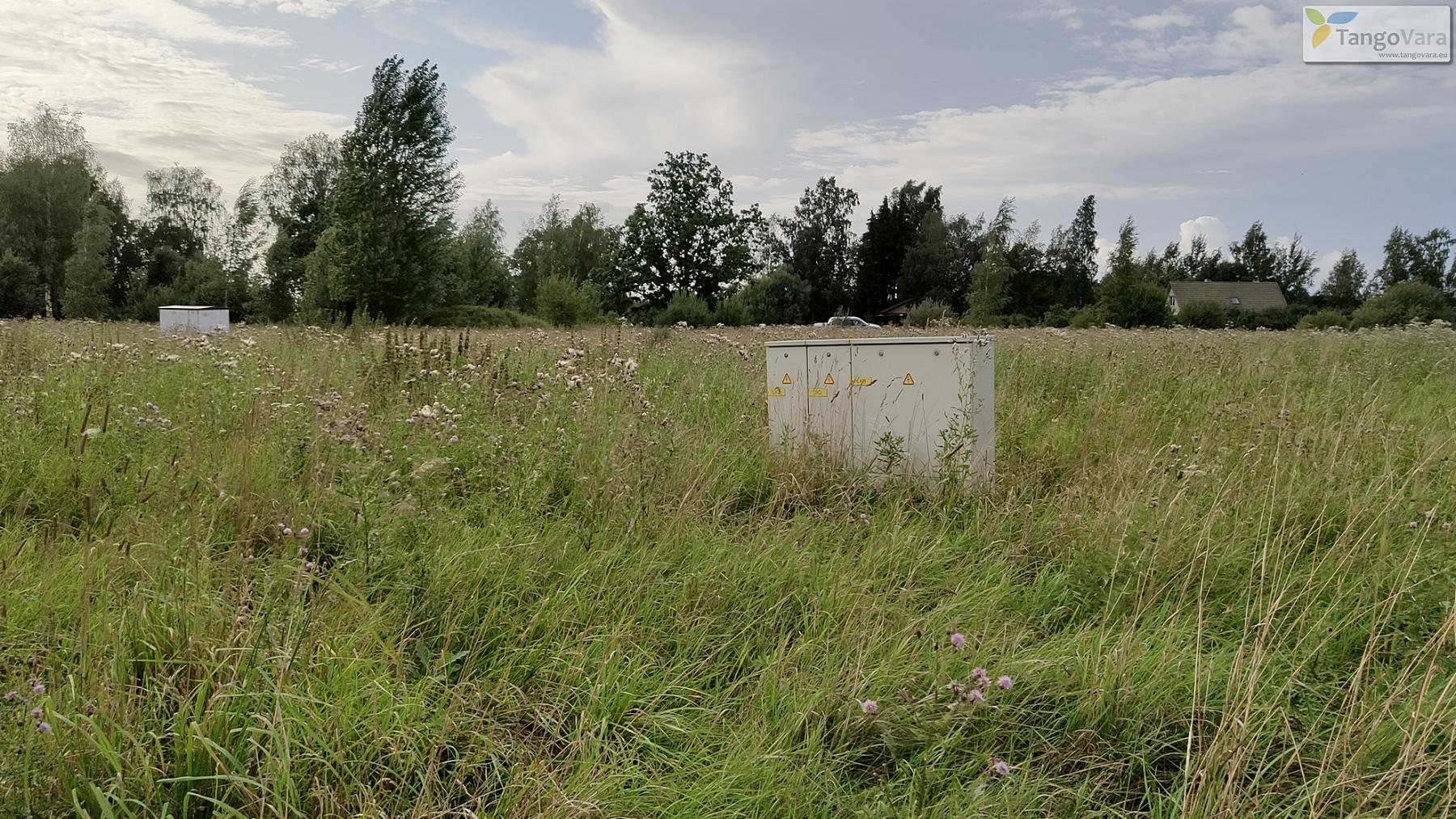 Nurme-raudrohu_Pärnumaa_ves-13