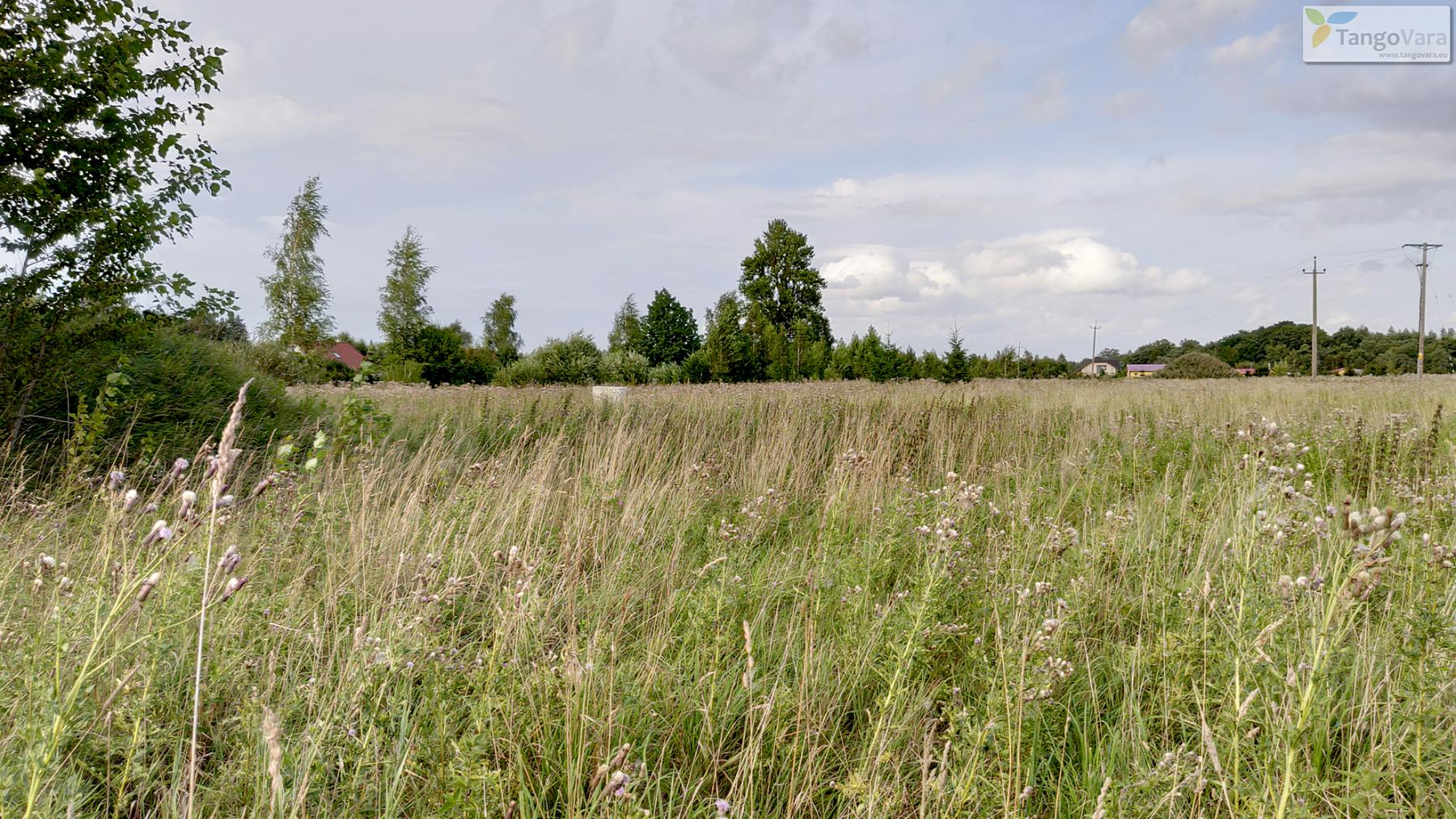 Nurme-raudrohu_Pärnumaa_ves-22