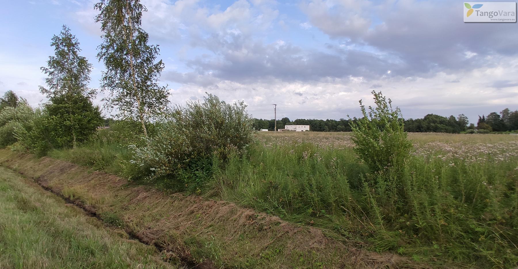 Nurme-raudrohu_Pärnumaa_ves-3